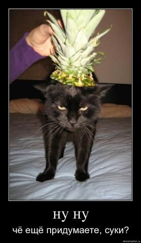 cats_so_funny01.jpg