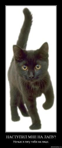 cats_so_funny02.jpg