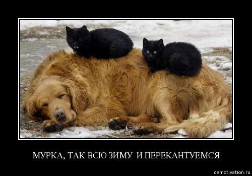 cats_so_funny03.jpg