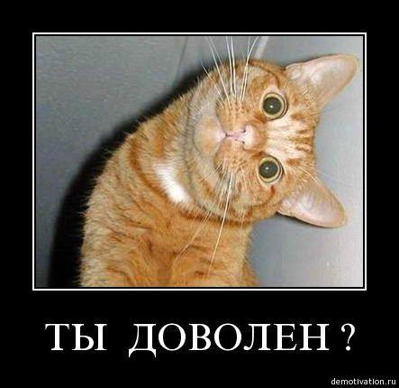 cats_so_funny04.jpg