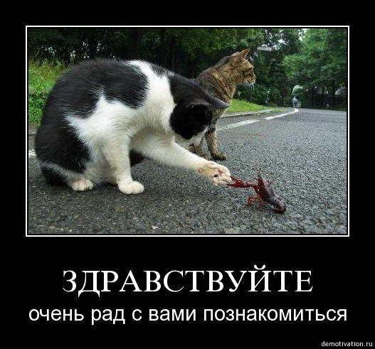 cats_so_funny05.jpg
