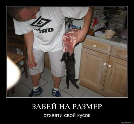 cats_so_funny06.jpg