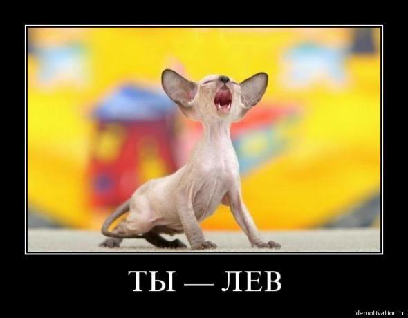 cats_so_funny07.jpg