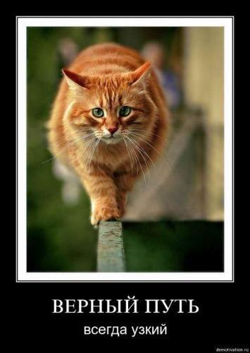 cats_so_funny08.jpg