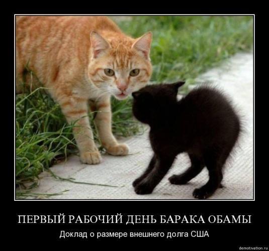 cats_so_funny09.jpg