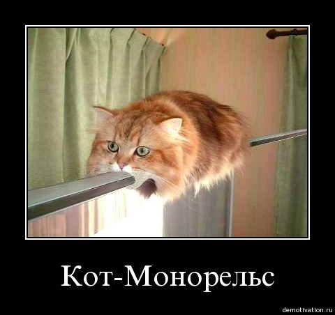 cats_so_funny10.jpg