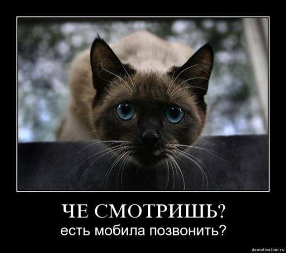 cats_so_funny11.jpg