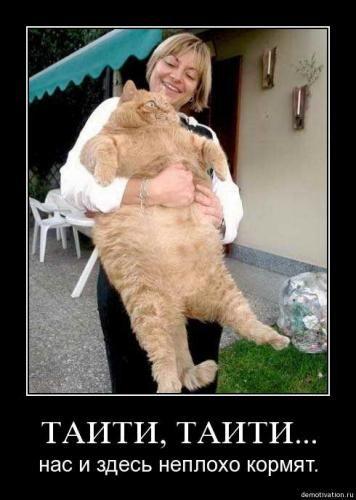 cats_so_funny12.jpg