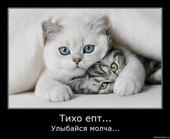 cats_so_funny13.jpg