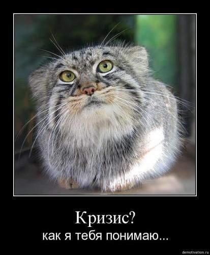 cats_so_funny14.jpg