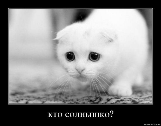 cats_so_funny15.jpg