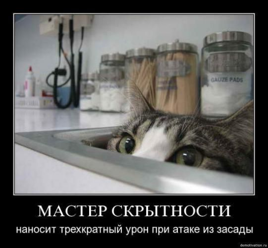 cats_so_funny16.jpg