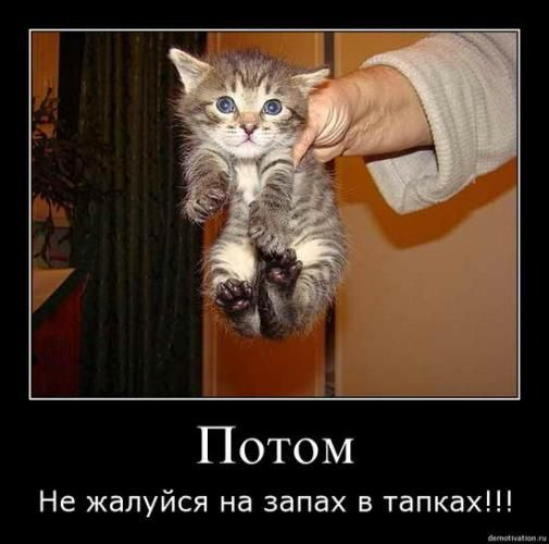cats_so_funny17.jpg
